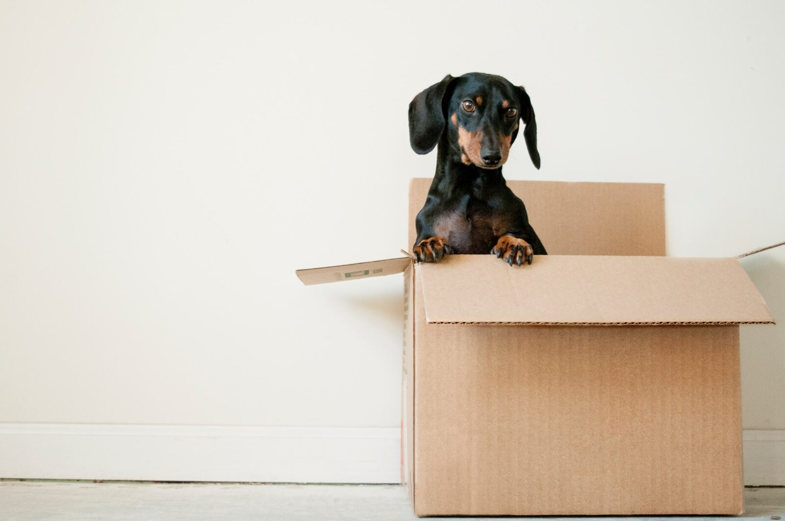 Get a dog accustomed to moving supplies so on the moving day they'll not cause any trouble.